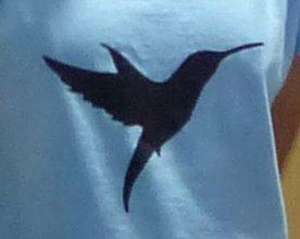 Kolibris-Köln-Logo